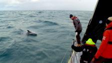 Vi blir omringade av delfiner!